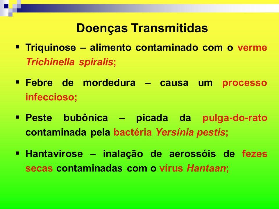 Doenças Transmitidas  Triquinose – alimento contaminado com o verme Trichinella spiralis;  Febre de mordedura – causa um processo infeccioso;  Pest