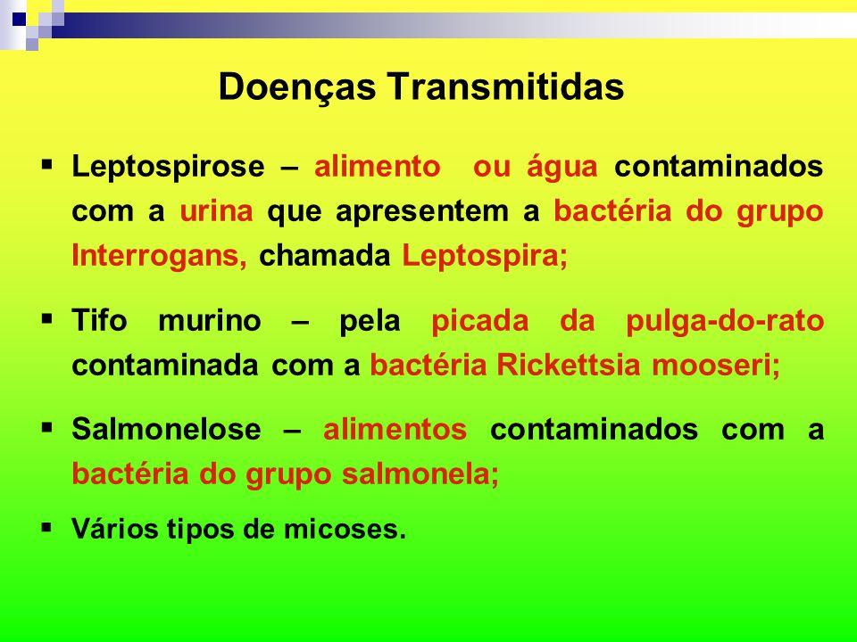  Leptospirose – alimento ou água contaminados com a urina que apresentem a bactéria do grupo Interrogans, chamada Leptospira;  Tifo murino – pela pi