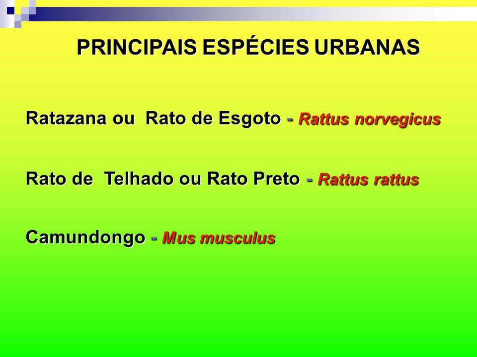 PRINCIPAIS ESPÉCIES URBANAS Ratazana ou Rato de Esgoto - Rattus norvegicus Rato de Telhado ou Rato Preto - Rattus rattus Camundongo - Mus musculus