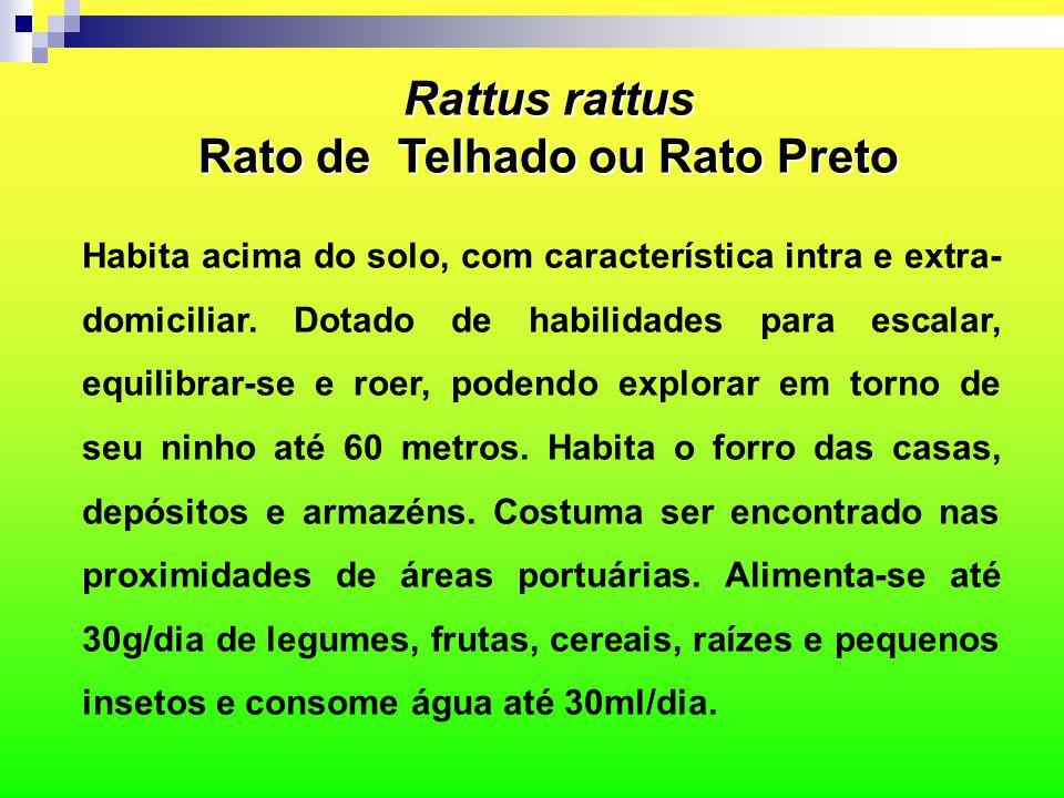  Corpo leve e delgado (agilidade);  A coloração varia entre o preto e o cinza escuro;  Apresenta neofobia (medo do novo);  A cauda é mais longa que a cabeça + corpo (dá equilíbrio ao animal);  Orelhas grandes e proeminentes;  Olhos grandes e focinho afilado; Rattus rattus Rato de Telhado ou Rato Preto