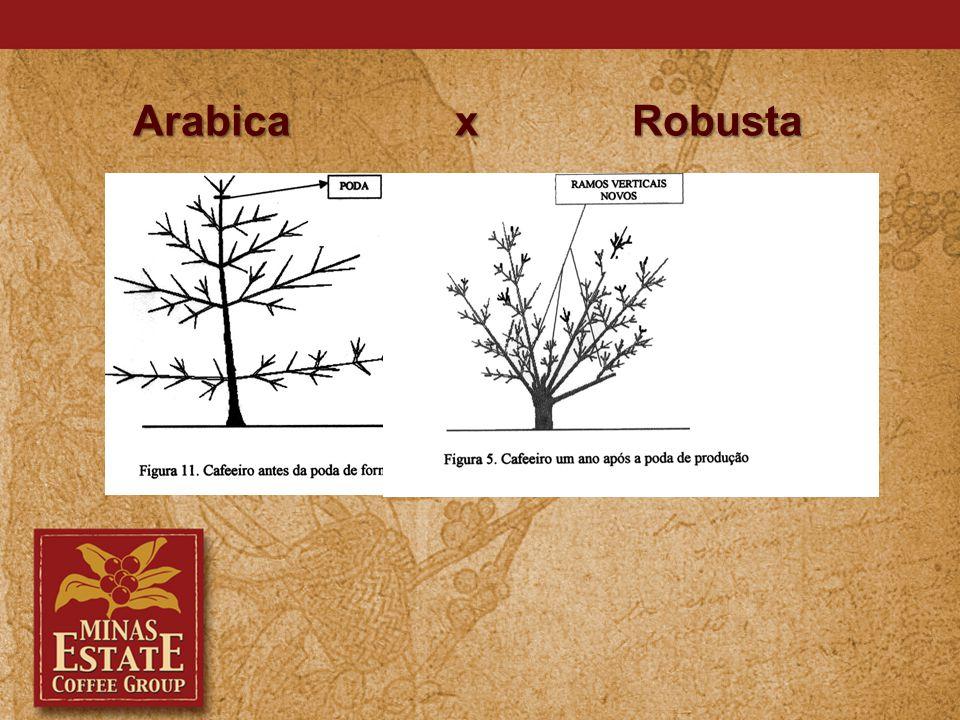 Arabica x Robusta