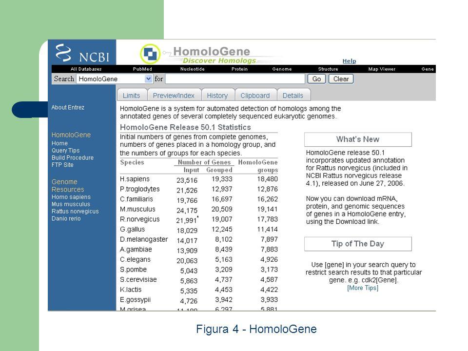 Figura 4 - HomoloGene