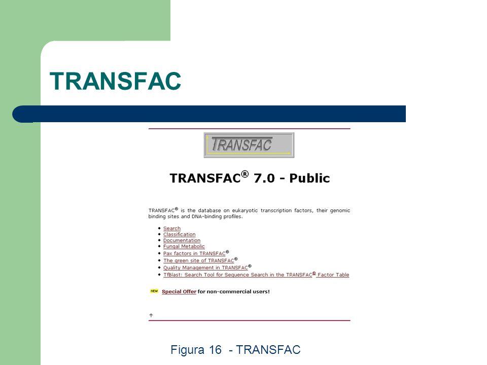 TRANSFAC Figura 16 - TRANSFAC