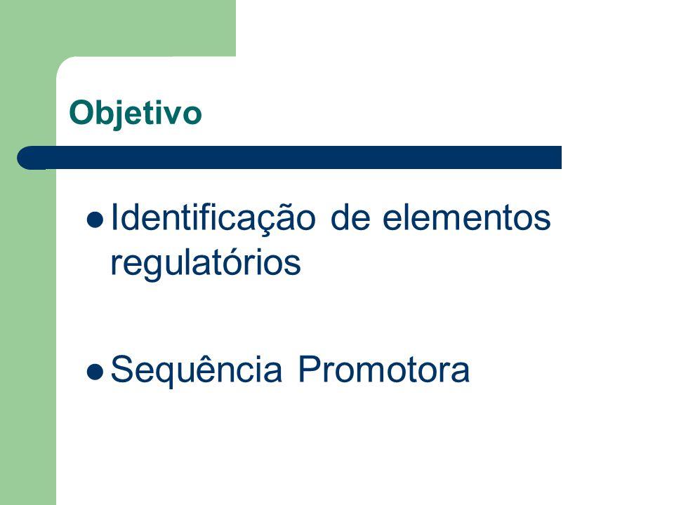 Objetivo Identificação de elementos regulatórios Sequência Promotora