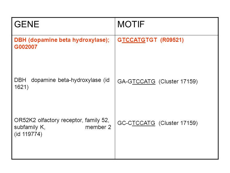 GENEMOTIF DBH (dopamine beta hydroxylase); G002007 DBH dopamine beta-hydroxylase (id 1621) OR52K2 olfactory receptor, family 52, subfamily K, member 2 (id 119774) GTCCATGTGT (R09521) GA-GTCCATG (Cluster 17159) GC-CTCCATG (Cluster 17159)