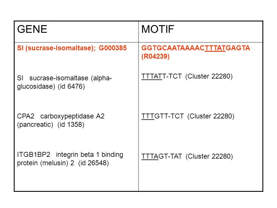 GENEMOTIF SI (sucrase-isomaltase); G000385 SI sucrase-isomaltase (alpha- glucosidase) (id 6476) CPA2 carboxypeptidase A2 (pancreatic) (id 1358) ITGB1BP2 integrin beta 1 binding protein (melusin) 2 (id 26548) GGTGCAATAAAACTTTATGAGTA (R04239) TTTATT-TCT (Cluster 22280) TTTGTT-TCT (Cluster 22280) TTTAGT-TAT (Cluster 22280)