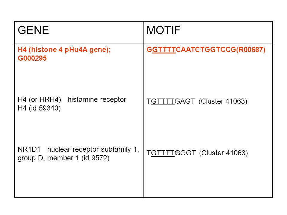 GENEMOTIF H4 (histone 4 pHu4A gene); G000295 H4 (or HRH4) histamine receptor H4 (id 59340) NR1D1 nuclear receptor subfamily 1, group D, member 1 (id 9572) GGTTTTCAATCTGGTCCG(R00687) TGTTTTGAGT (Cluster 41063) TGTTTTGGGT (Cluster 41063)