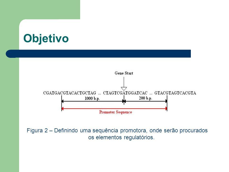 Objetivo Figura 2 – Definindo uma sequência promotora, onde serão procurados os elementos regulatórios.