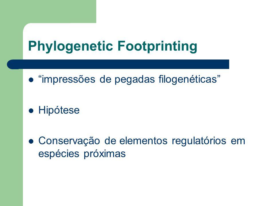 Phylogenetic Footprinting Genes Ortólogos Procedimento baseia-se na comparação de sequências genômicas 2 etapas: