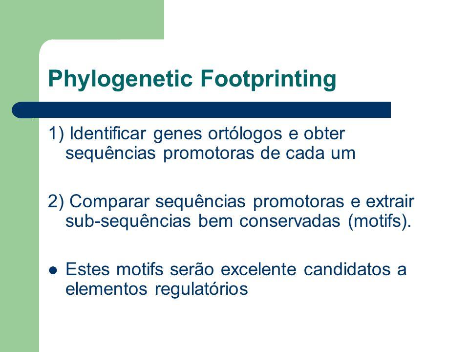 Phylogenetic Footprinting 1) Identificar genes ortólogos e obter sequências promotoras de cada um 2) Comparar sequências promotoras e extrair sub-sequências bem conservadas (motifs).