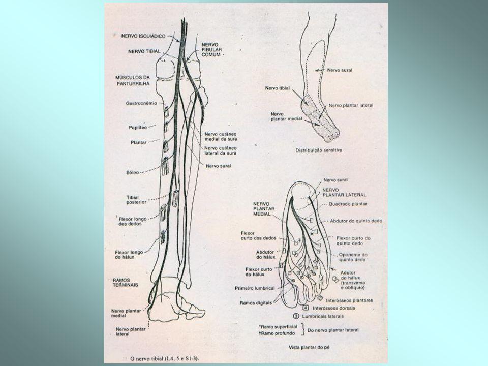 -N. Tibial (L4-L5,S1-S3)= sensibilidade face externa 1/3 inferior da perna e planta do pé.