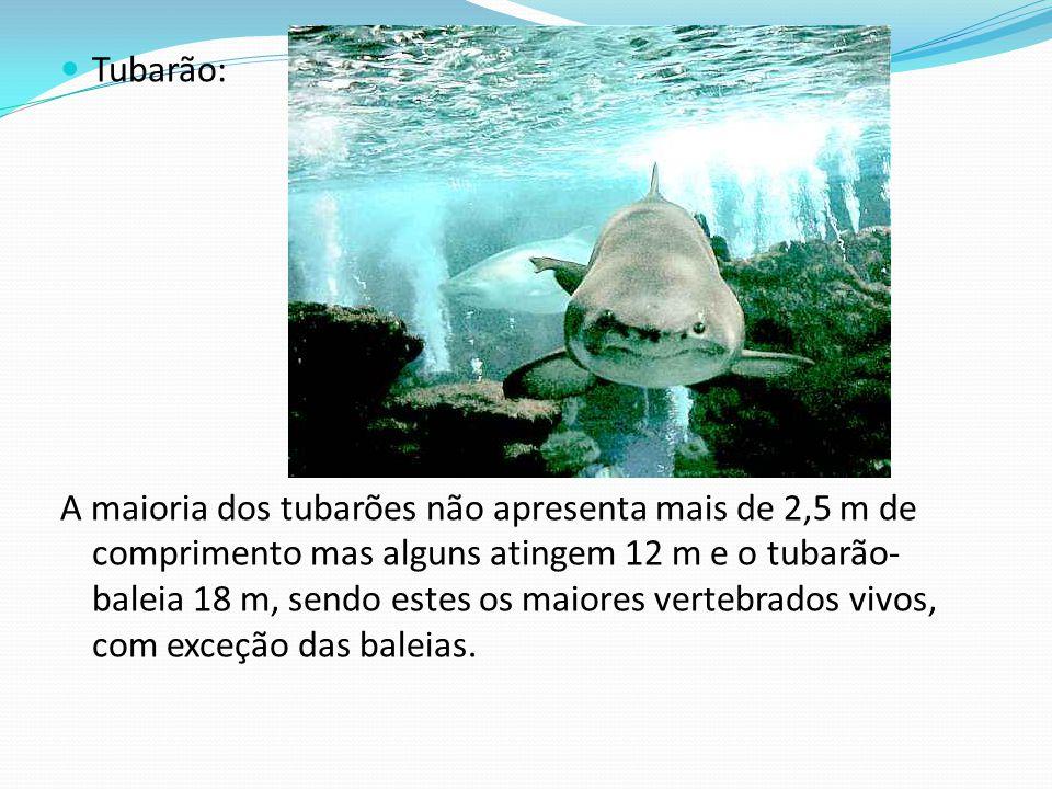 Tubarão: A maioria dos tubarões não apresenta mais de 2,5 m de comprimento mas alguns atingem 12 m e o tubarão- baleia 18 m, sendo estes os maiores ve