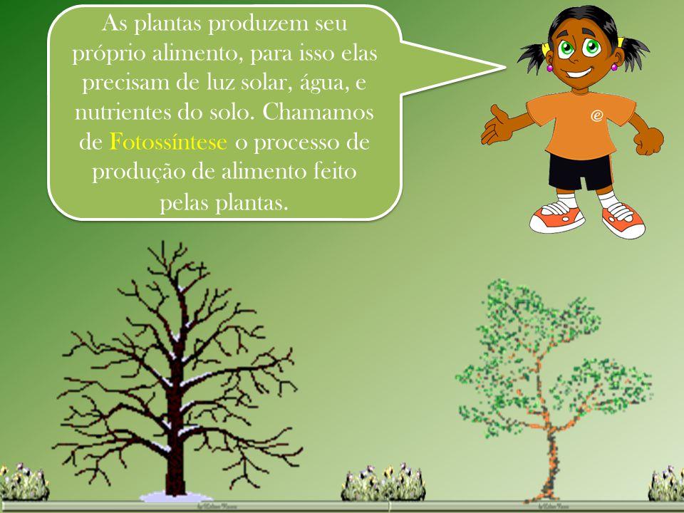 As plantas produzem seu próprio alimento, para isso elas precisam de luz solar, água, e nutrientes do solo. Chamamos de Fotossíntese o processo de pro