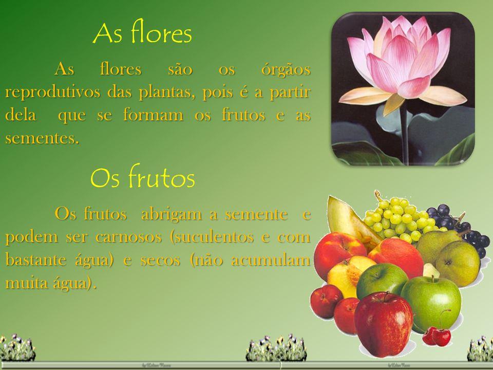As flores As flores são os órgãos reprodutivos das plantas, pois é a partir dela que se formam os frutos e as sementes. Os frutos Os frutos abrigam a