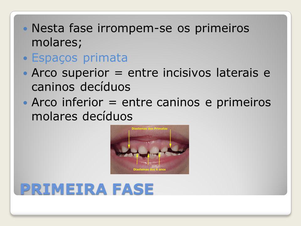 PRIMEIRA FASE Nesta fase irrompem-se os primeiros molares; Espaços primata Arco superior = entre incisivos laterais e caninos decíduos Arco inferior =
