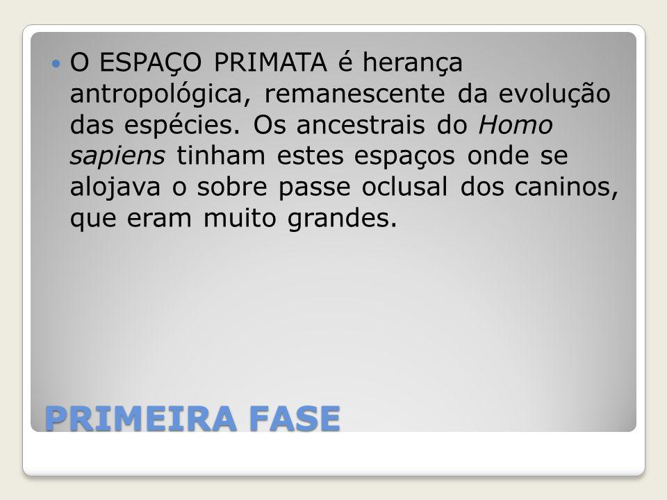 PRIMEIRA FASE O ESPAÇO PRIMATA é herança antropológica, remanescente da evolução das espécies. Os ancestrais do Homo sapiens tinham estes espaços onde