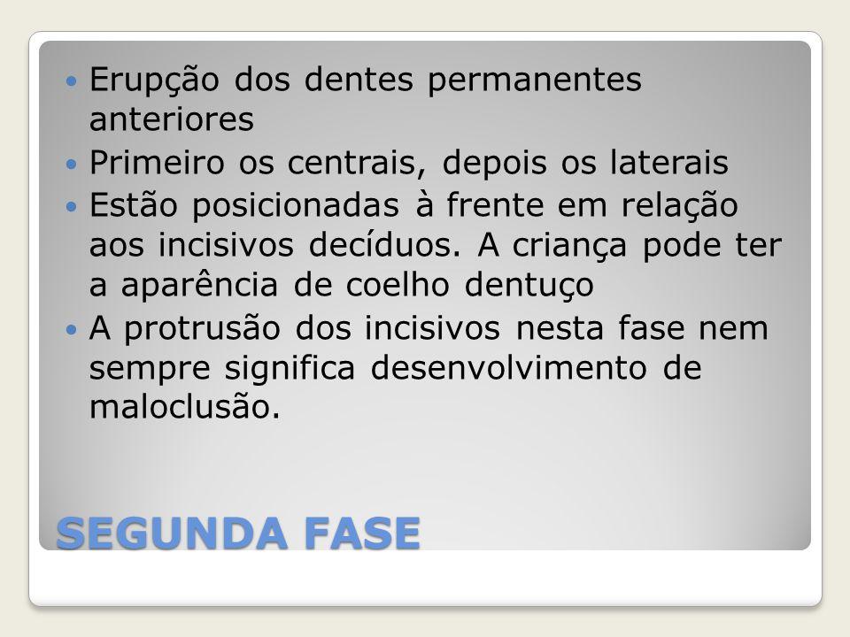 SEGUNDA FASE Erupção dos dentes permanentes anteriores Primeiro os centrais, depois os laterais Estão posicionadas à frente em relação aos incisivos d