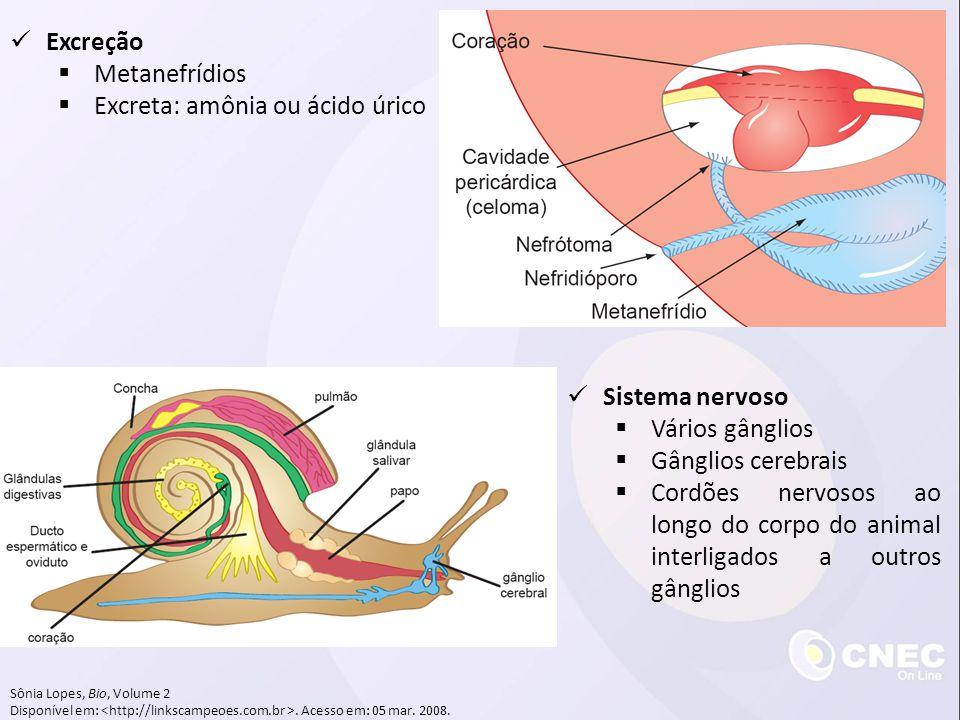 Excreção  Metanefrídios  Excreta: amônia ou ácido úrico Sônia Lopes, Bio, Volume 2 Disponível em:.