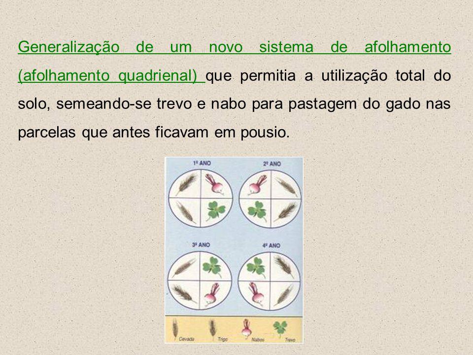Generalização de um novo sistema de afolhamento (afolhamento quadrienal) que permitia a utilização total do solo, semeando-se trevo e nabo para pastag