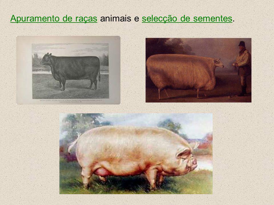 Apuramento de raças animais e selecção de sementes.