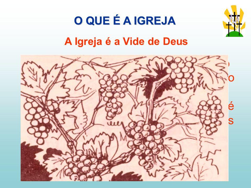 No A.T.O povo hebreu era comparado frequentemente a uma vinha, a vinha do Senhor.