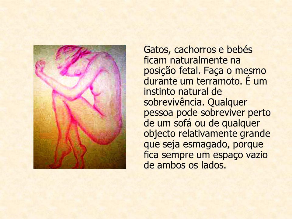 Gatos, cachorros e bebés ficam naturalmente na posição fetal.