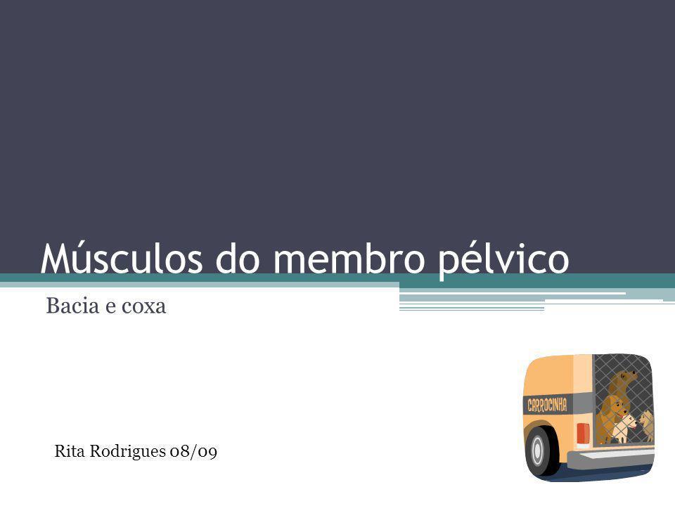Músculos do membro pélvico Bacia e coxa Rita Rodrigues 08/09