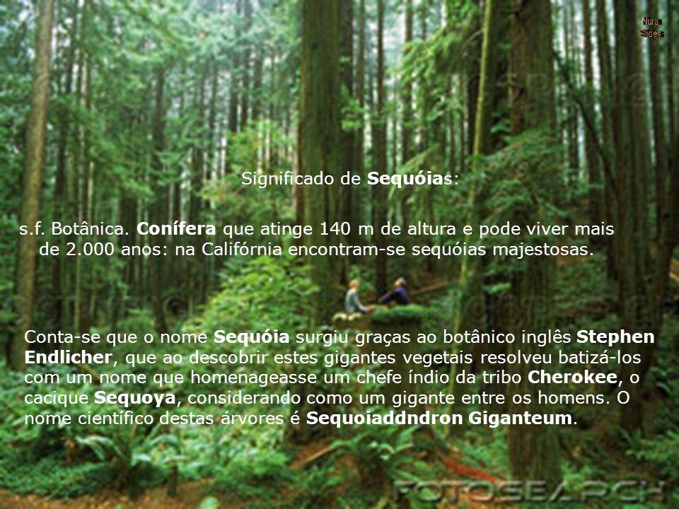 Significado de Sequóias: s.f.Botânica.