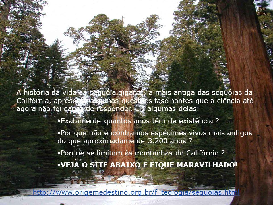 Formatação by nur@ nurasil@globo.com Brasília - DF Brasil Música: Chopin - Nocturne