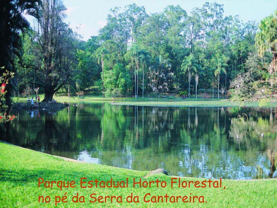 Parque Estadual Horto Florestal, no pé da Serra da Cantareira.