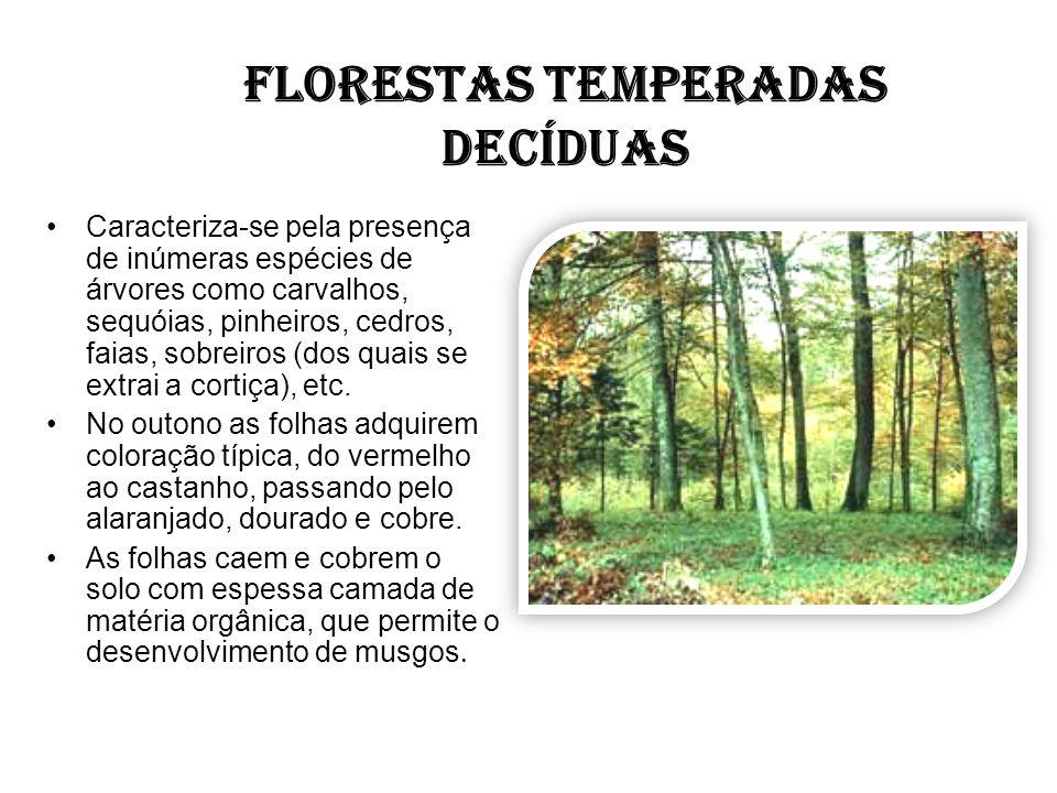 FLORESTAS TEMPERADAS DECÍDUAS Caracteriza-se pela presença de inúmeras espécies de árvores como carvalhos, sequóias, pinheiros, cedros, faias, sobreir