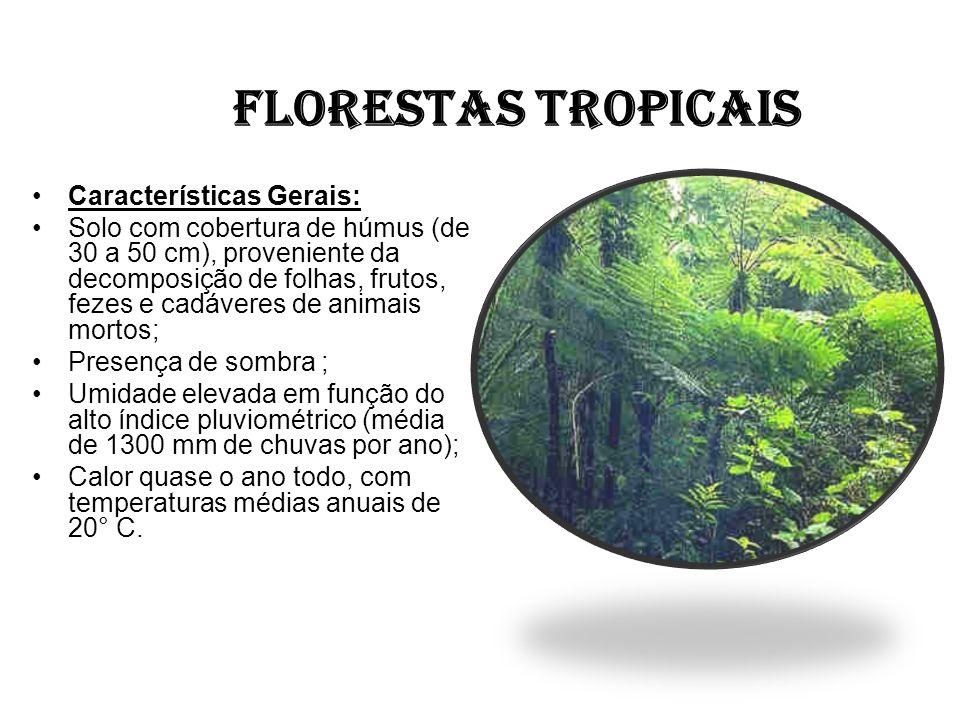 FLORESTAS TROPICAIS Características Gerais: Solo com cobertura de húmus (de 30 a 50 cm), proveniente da decomposição de folhas, frutos, fezes e cadáve