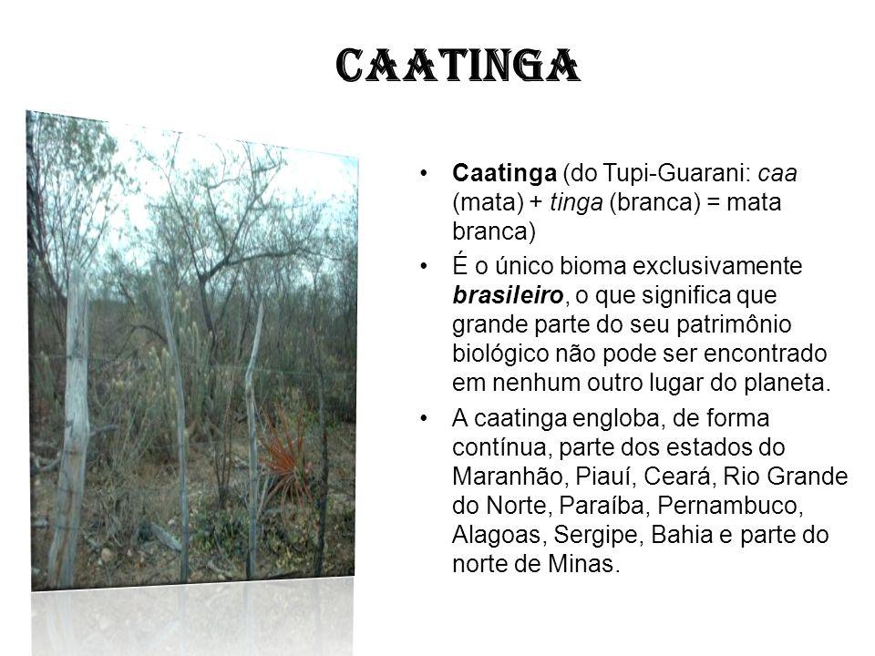 CAATINGA Caatinga (do Tupi-Guarani: caa (mata) + tinga (branca) = mata branca) É o único bioma exclusivamente brasileiro, o que significa que grande p