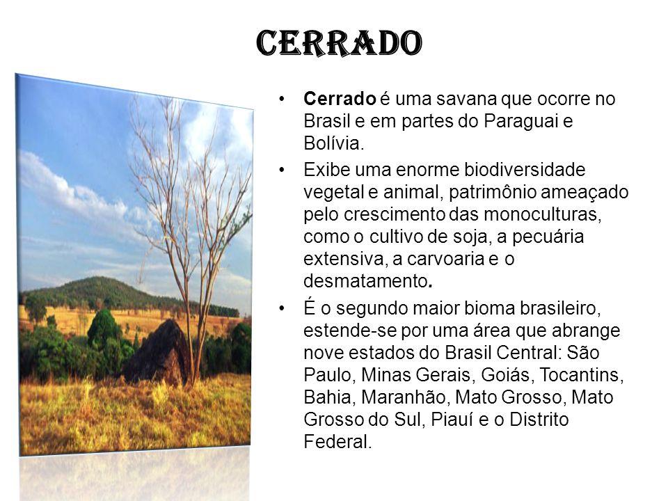 CERRADO Cerrado é uma savana que ocorre no Brasil e em partes do Paraguai e Bolívia. Exibe uma enorme biodiversidade vegetal e animal, patrimônio amea