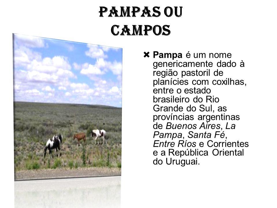 PAMPAS OU CAMPOS  Pampa é um nome genericamente dado à região pastoril de planícies com coxilhas, entre o estado brasileiro do Rio Grande do Sul, as