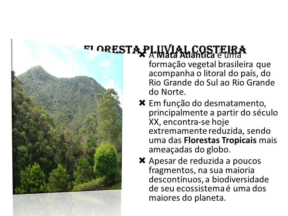 FLORESTA PLUVIAL COSTEIRA  A Mata Atlântica é uma formação vegetal brasileira que acompanha o litoral do país, do Rio Grande do Sul ao Rio Grande do