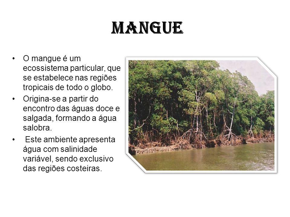 MANGUE O mangue é um ecossistema particular, que se estabelece nas regiões tropicais de todo o globo. Origina-se a partir do encontro das águas doce e