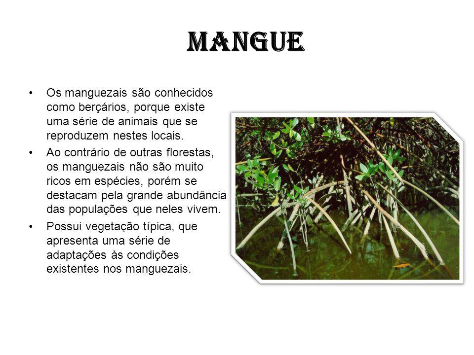 MANGUE Os manguezais são conhecidos como berçários, porque existe uma série de animais que se reproduzem nestes locais. Ao contrário de outras florest