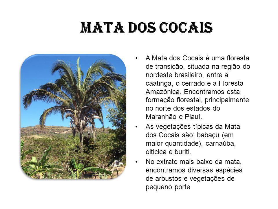 MATA DOS COCAIS A Mata dos Cocais é uma floresta de transição, situada na região do nordeste brasileiro, entre a caatinga, o cerrado e a Floresta Amaz