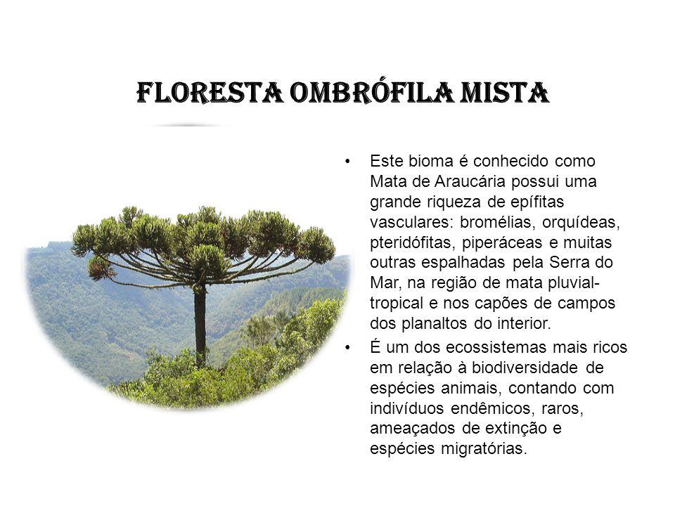 FLORESTA OMBRÓFILA MISTA Este bioma é conhecido como Mata de Araucária possui uma grande riqueza de epífitas vasculares: bromélias, orquídeas, pteridó