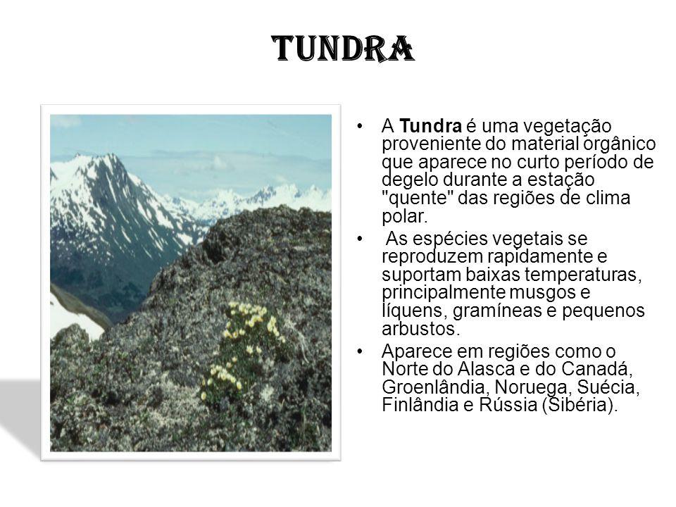 TUNDRA A Tundra é uma vegetação proveniente do material orgânico que aparece no curto período de degelo durante a estação