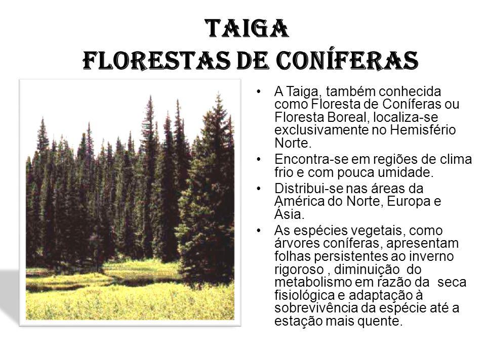 TAIGA FLORESTAS DE CONÍFERAS A Taiga, também conhecida como Floresta de Coníferas ou Floresta Boreal, localiza-se exclusivamente no Hemisfério Norte.