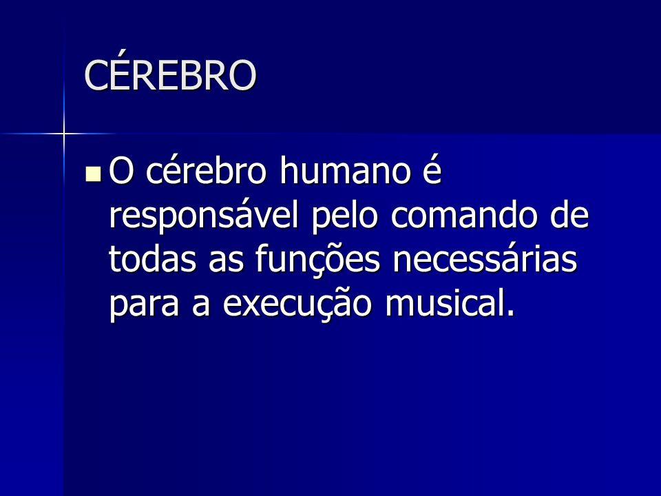 CÉREBRO O cérebro humano é responsável pelo comando de todas as funções necessárias para a execução musical. O cérebro humano é responsável pelo coman