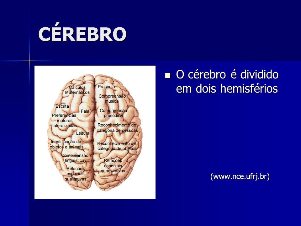 CÉREBRO O cérebro é dividido em dois hemisférios O cérebro é dividido em dois hemisférios (www.nce.ufrj.br)