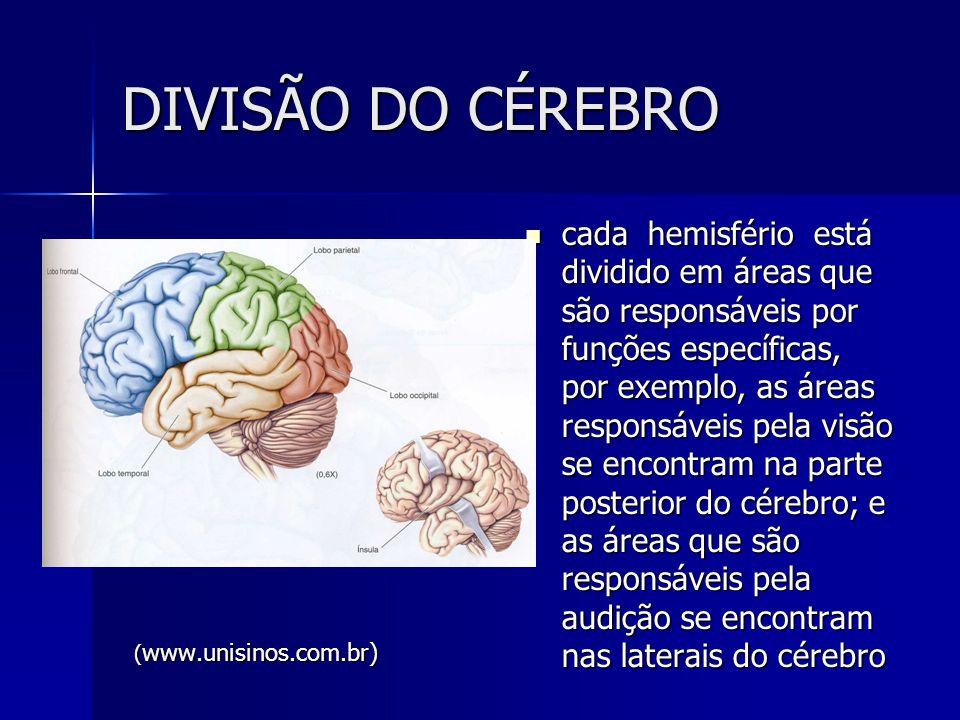 DIVISÃO DO CÉREBRO cada hemisfério está dividido em áreas que são responsáveis por funções específicas, por exemplo, as áreas responsáveis pela visão