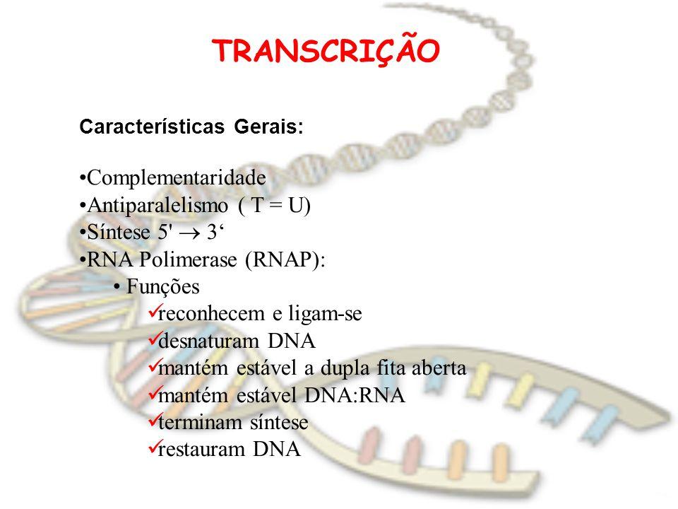 TRANSCRIÇÃO Características Gerais: Complementaridade Antiparalelismo ( T = U) Síntese 5'  3' RNA Polimerase (RNAP): Funções reconhecem e ligam-se de
