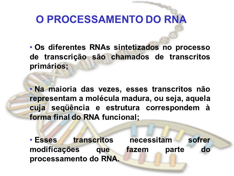 O PROCESSAMENTO DO RNA Os diferentes RNAs sintetizados no processo de transcrição são chamados de transcritos primários; Na maioria das vezes, esses t