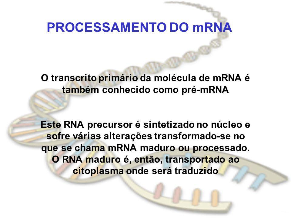 PROCESSAMENTO DO mRNA O transcrito primário da molécula de mRNA é também conhecido como pré-mRNA Este RNA precursor é sintetizado no núcleo e sofre vá