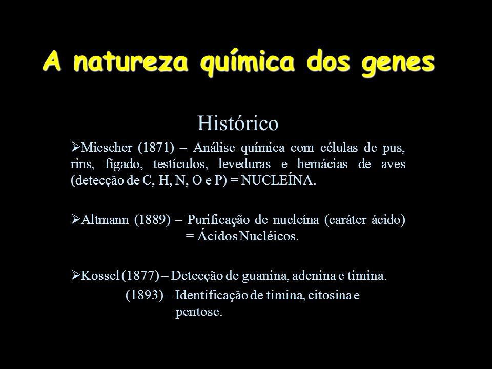 A natureza química dos genes Histórico  Miescher (1871) – Análise química com células de pus, rins, fígado, testículos, leveduras e hemácias de aves