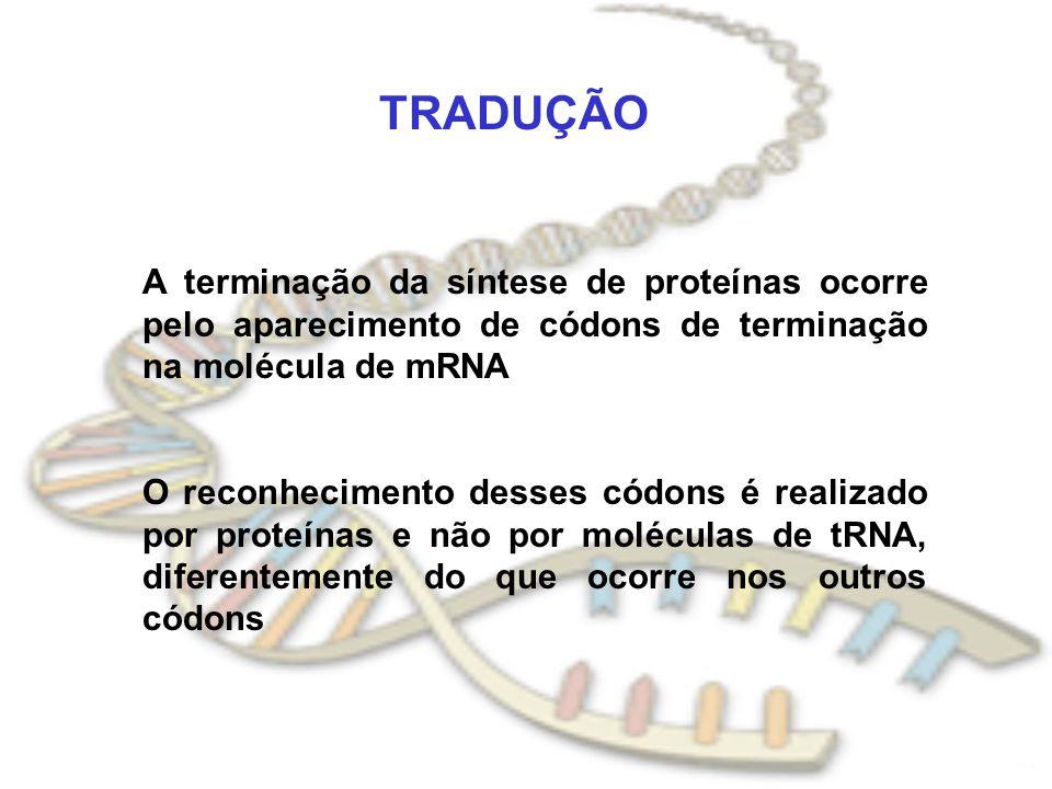 TRADUÇÃO A terminação da síntese de proteínas ocorre pelo aparecimento de códons de terminação na molécula de mRNA O reconhecimento desses códons é re